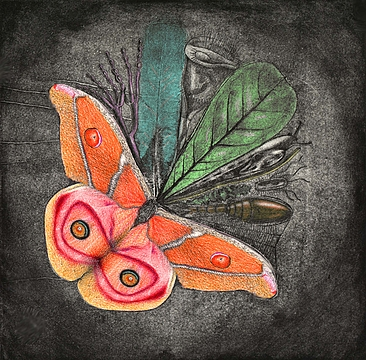 http://www.pupating.org/images/art/qdig-files/converted-images/2D/xsm_000_Biodiversity_color.jpg